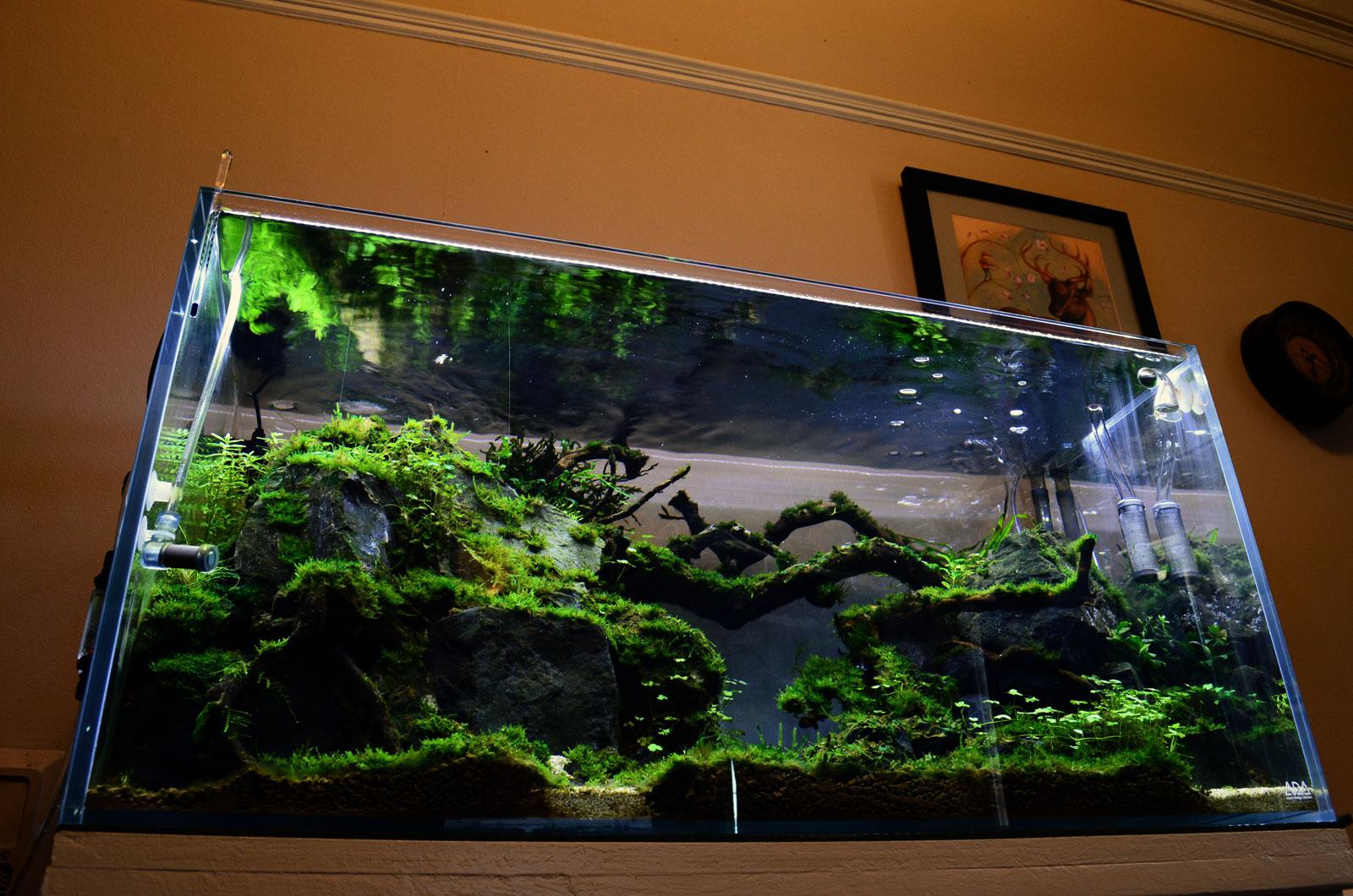 Aquarium shrimp tank images galleries for Shrimp fish tank