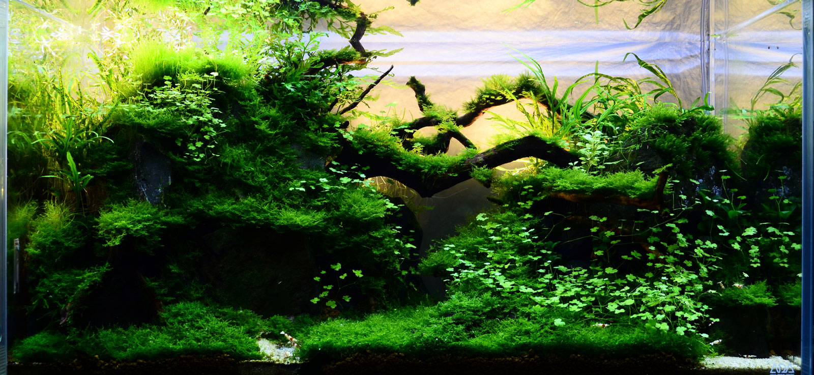 Lo-Tec PRL Tank Page 3 AquaScaping World Forum