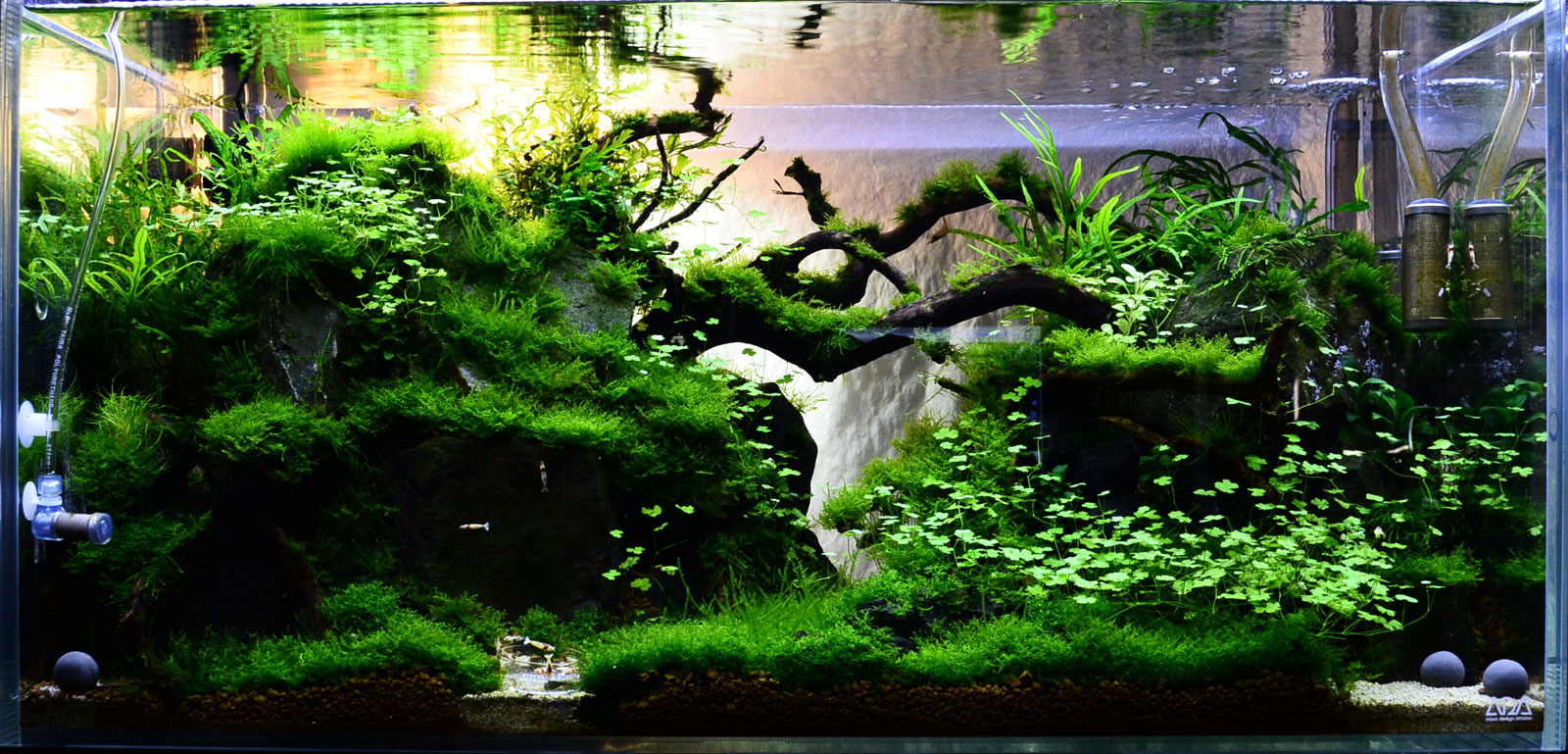 Mini Aquascape : Riccardia chamedryfolia question AquaScaping World Forum