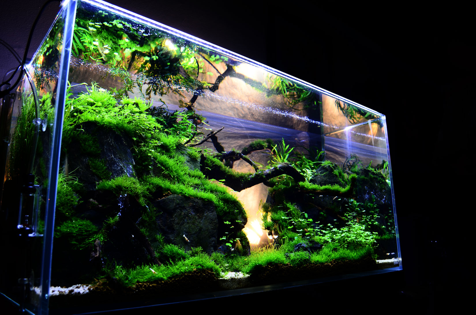 Takashi Amano Aquascaping Can Be Described As Gardening Underwater U2013as It  Involves The Arrangement Of A Variety Of Aquatic Plants, Rocks, St.