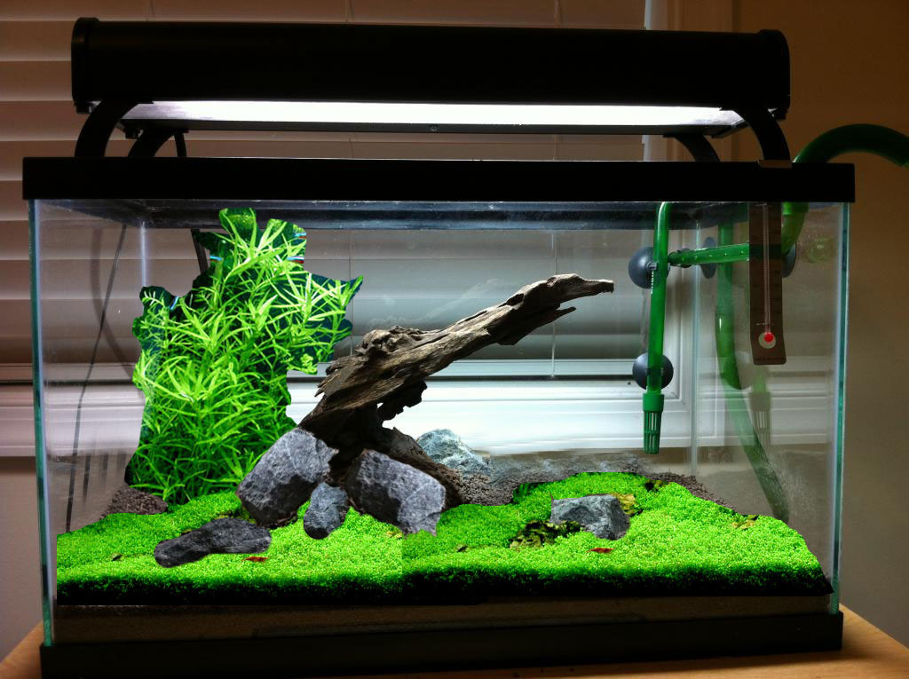 10 Gallon Hardscape Opinions The Planted Tank Forum