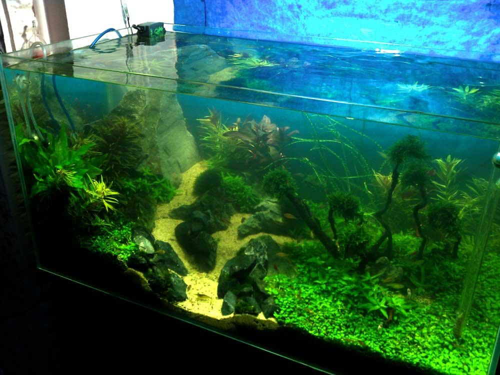 Rjomafoss AquaScaping World Forum