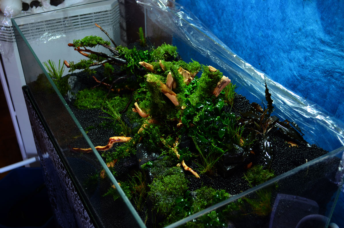 Scape Aquarium : 60f ***splintered***: A New Jetti Journal AquaScaping World Forum